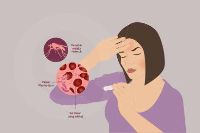 Malaria adalah sebuah penyakit yang disebabkan oleh parasit yang tersebar melalui gigitan nyamuk