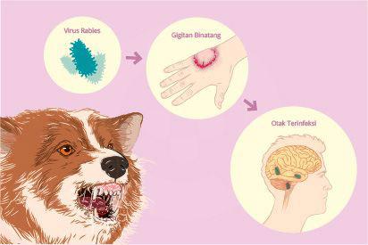 Rabies adalah penyakit zoonosis yang disebabkan infeksi virus rabies