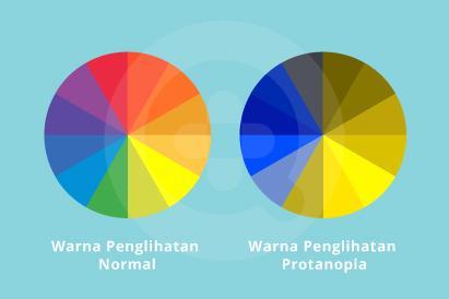 Protanopia merupakan buta warna akibat tidak adanya sel kerucut L pada retina yang menyebabkan seseorang tidak dapat membedakan benda berwarna merah