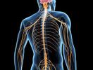 Vitamin B3 digunakan untuk menjaga kesehatan sistem saraf, sistem pencernaan, dan kulit
