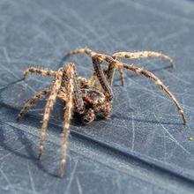 salah satu cara mengusir laba-laba adalah memelihara kucing