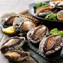 Abalone adalah jenis kerang yang kaya nutrisi
