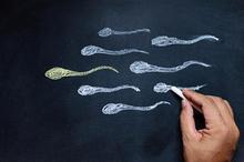 Proses spermatogenesis pada pria