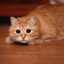Ailurophobia adalah phobia kucing