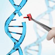 Genotip dan fenotip adalah bagian dari konsep pewarisan sifat