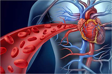 Sistem peredaran darah terdiri dari jantung dan pembuluh darah