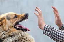 penyebab rabies selain gigitan anjing