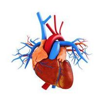 CAD adalah penyakit jantung yang bisa berujung pada komplikasi berbahaya