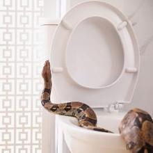 Ada beberapa cara mencegah ular masuk rumah yang bisa Anda lakukan