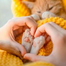 Perasaan sedih kucing kesayangan mati sangatlah wajar