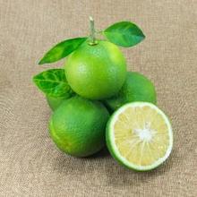 Cara menghilangkan bau ketiak dengan jeruk nipis sangat mudah dilakukan