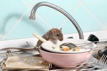 Hantavirus adalah penyakit pernapasan yang disebabkan oleh tikus