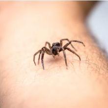 Pertolongan pertama digigit laba-laba adalah membersihkan luka, mengompresnya dengan kompres dingin, serta mengoleskan salep antiinflamasi
