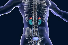 Kelenjar adrenal terletak diatas ginjal
