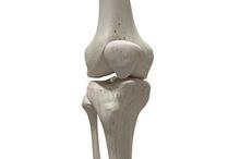 Tulang tempurung lutut