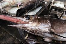 Ikan laut berpotensi memiliki kandungan merkuri tinggi