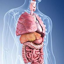 Internis adalah dokter spesialis yang menangani penyakit dalam dan sistem organ tubuh lainnya