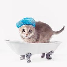 Ada cara memandikan anak kucing yang benar agar tidak stres