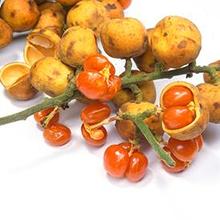 manfaat buah rambai untuk kesehatan