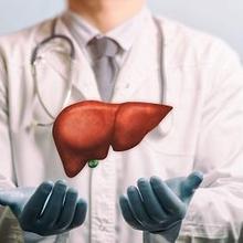 Zat yang dihasilkan oleh hati adalah empedu, albumin, kolesterol, dan urea