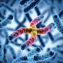Kelainan kromosom bisa terjadi akibat perubahan struktural maupun numerik