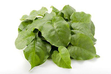 Meski memiliki segudang manfaat, daun binahong ternyata juga memiliki efek samping untuk kesehatan