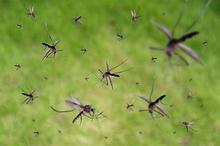 Pemberantasan sarang nyamuk dapat dilakukan dengan membersihkan barang di rumah