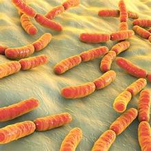 Bakteri yang baik untuk pencernaan