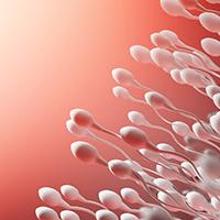 Manfaat asam folat untuk pria adalah meningkatkan kualitas sperma