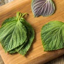 Manfaat daun perilla salah satunya meredakan gangguan pencernaan