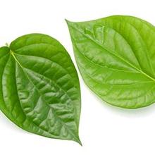 daun sirih untuk mata