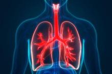 Fungsi bronkus dalam tubuh manusia