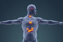 Gangguan pada sistem endokrin ditangani oleh dokter spesialis endokrinologi