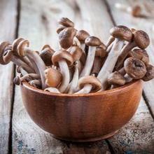 manfaat jamur shimeji salah satunya adalah mencegah kanker