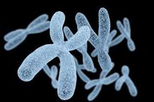 Kromosom manusia membentuk ciri khas tiap individu
