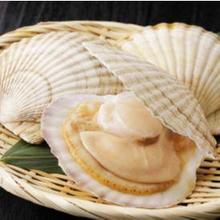Scallop adalah makanan laut yang sangat bernutrisi, tapi hati-hati juga mengonsumsinya.