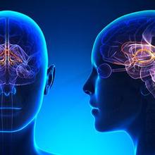 sistem limbik adalah