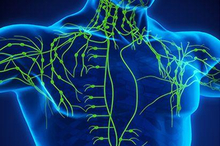 Sistem limfatik atau sistem getah bening adalah bagian tubuh yang berperan penting dalam sistem kekebalan tubuh