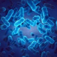 Struktur tubuh bakteri terdiri dari beberapa bagian yang memiliki fungsi berbeda