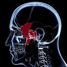 Tulang baji merupakan bagian dari kepala
