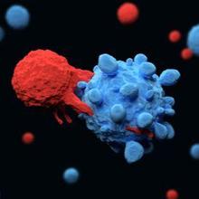 T-cell adalah bagian dari sistem kekebalan tubuh yang fokus pada partikel asing tertentu