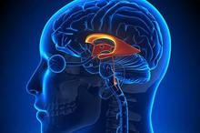 Sistem endokrin atau sistem hormon adalah jaringan kelenjar penghasil hormon, senyawa komunikasi antar sel