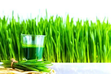 Manfaat wheatgrass untuk kesehatan