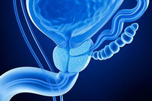 Fungsi kelenjar prostat yang utama adalah menjaga kesuburan pria