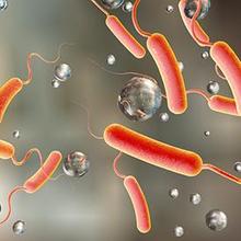 Penyakit kolera sering terjadi di daerah dengan sanitasi buruk