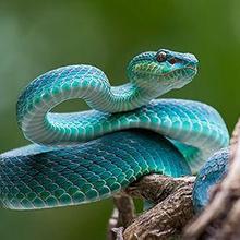 Phobia ular bisa disembuhkan dengan terapi