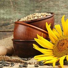 Biji bunga matahari ternyata memiliki manfaat bagi kesehatan tubuh
