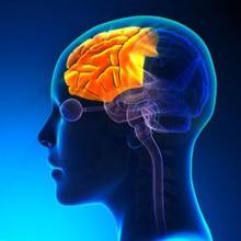Lobus frontal adalah bagian dari otak besar atau serebrum yang menjadi lobus terbesar di otak