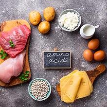 Metabolisme protein dimulai saat makanan mulai memasuki lambung