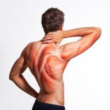 Setiap jaringan otot memiliki serabut otot yang berbeda